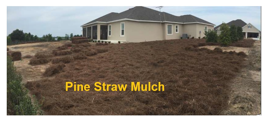 Pine Straw Mulch in Place