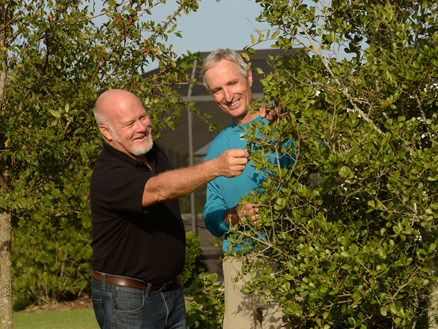 Steve Turnipseed and Lloyd Singleton admire a myrtle oak.